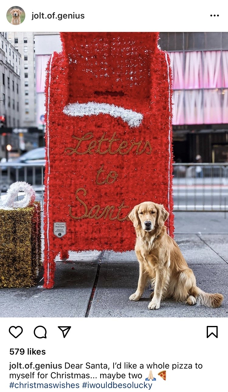 Pizza Dog in front of red mailbox