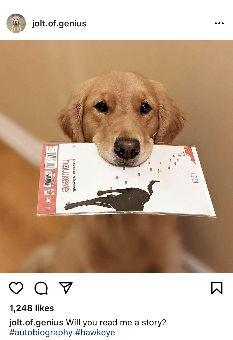 Jolt the Golden Retriever who plays Pizza Dog with Hawkeye #11